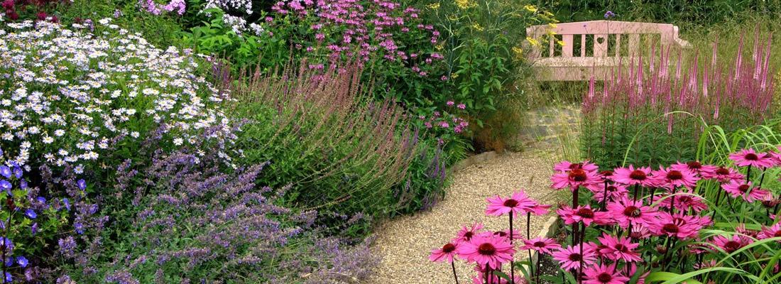 Выбираем засухоустойчивые многолетники для сада