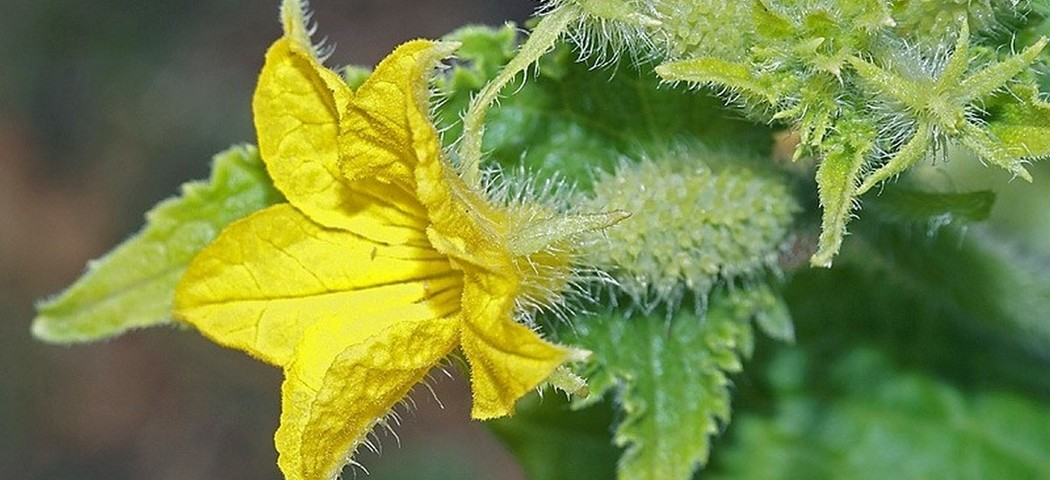 стимулятор цветения