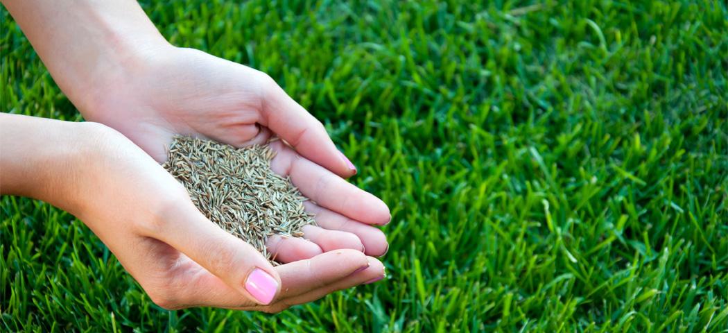 Znalezione obrazy dla zapytania Покупка газонной травы