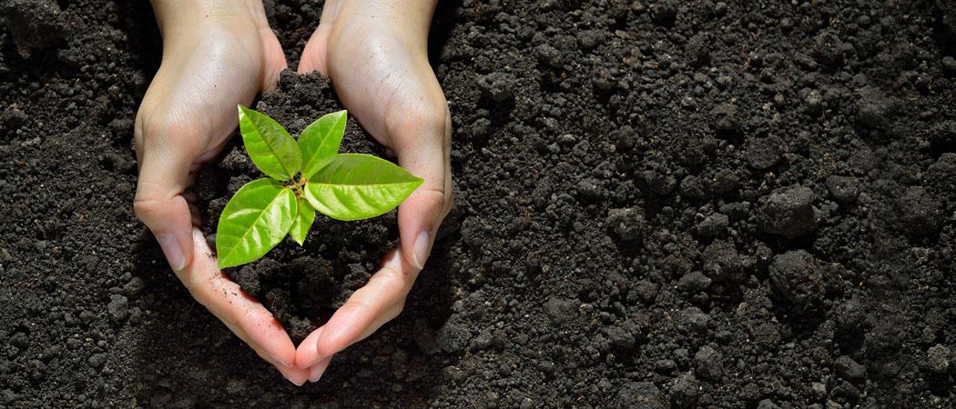 Виды садовой почвы, как узнать тип грунта на своем дачном участке
