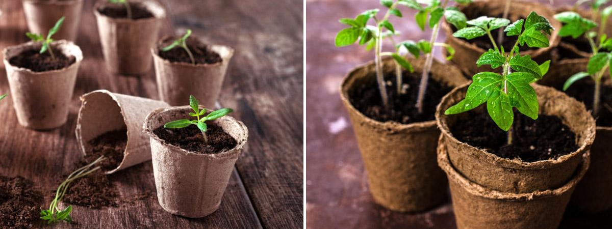 Сроки посева семян на рассаду, всхожесть семян